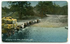 Bringing In The Wool Ox Team Wagon Australia 1910c postcard