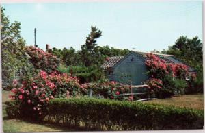 Rose Covered Cottage in Siasconset Massachusetts