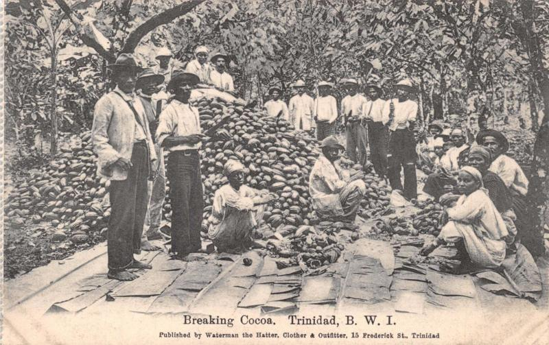 TRINIDAD BRITISH WEST INDIES BREAKING COCOA~WATERMAN PUBL POSTCARD c1910s
