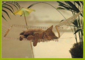 Kitten Cat In Cocktail Holiday Hammock Umbrella Nap Postcard