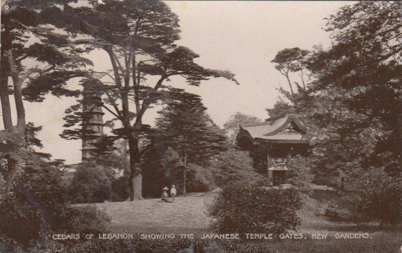 KEW GARDENS , London , 1920 ; Cedars of Lebanon, Japanese Temple Gates