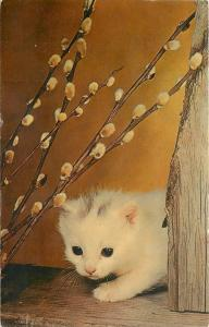 Ormond Beach Florida Cancel~White Kitten~Pussy Footing Around~1965 Pussy Willows