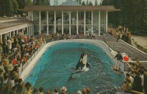 VANCOUVER , B.C. , Canada, 1950-60s ; Killer Whale Skana , Aquarium #2