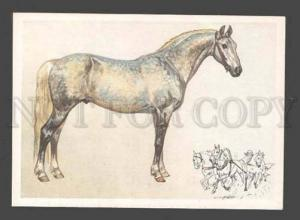 087742 Orlovsky trotter Breed HORSE old Russian Color Card
