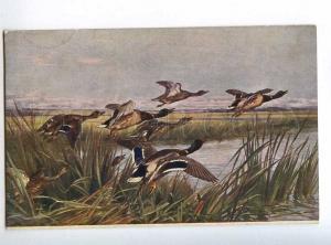 223612 RUSSIA BLINKS duck hunting Richard #816 old postcard