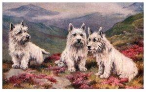 Dog ,  Poltalloch  Terriers
