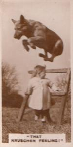 That Kruschen Feeling Daredevil Circus Dog Old Real Photo Cigarette Card