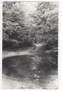 Landscape RPPC Wooded Scene pool at end of road Real Photo Postcard Kodak