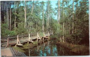 Bridge through Swamp - Okefenokee Swamp Park, Waycross Georgia