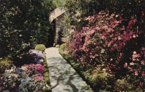 Alabama Mobile Azalea Lined Path At Bellingrath Gardens