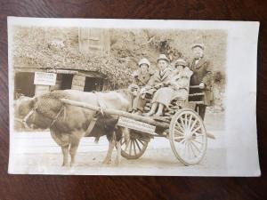 RPPC Hot Springs, Arkansas, Bull Cow Cart 1924 to Ashkum, Illinois Z1