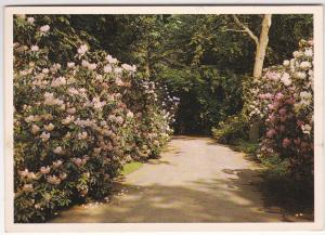 Post Card United States New York Long Island Bavard Cutting Arboretum