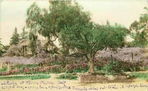 Hand Tint Sierra Madre California Wisteria Garden House Tree RPPC Photo Postcard