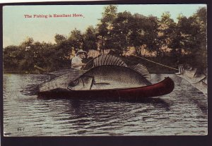 P1596 old unused postcard exaggerated fish the fishing is great here