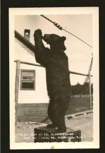 Black Bear at Ed Clarks Eskimo Sled Dog Ranch Woodstock N H Real Photo Postcard