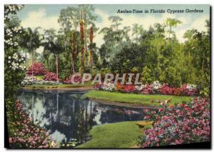 Old Postcard Azalea Time In Florida Cypress Gardens