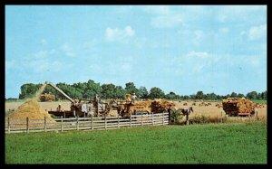 Amish Farmers Threshing Grain at Harvest Time