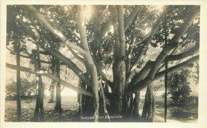Banyan Tree Honolulu Hawaii 1920s RPPC Photo Postcard 20-457
