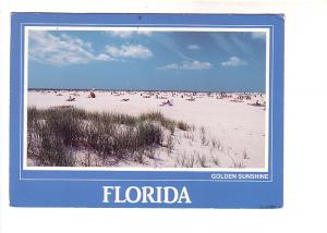 Many People on the Beach, Golden Sunshine, Florida, John Lantero