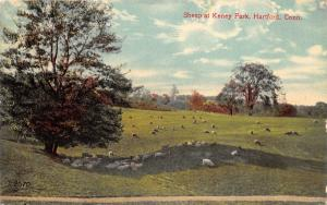 Hartford Connecticut~Keney Park~Sheep Grazing in Meadow~c1910 Postcard