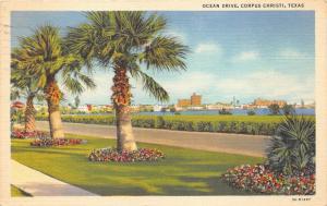 Corpus Christi Texas~Palm Trees & Flowers along Ocean Drive~Skyline Bknd~1947 Pc