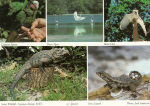 Cayman Islands , B.W.I. , 1950-70s ; Wildlife