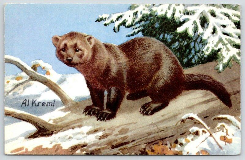 Al Kremel~Fisher Weasel in Snow Covered Tree~National Wildlife Federation~1958