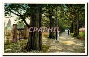 Old Postcard Ile St Honorat Allee des Cypres leading to the Monastery
