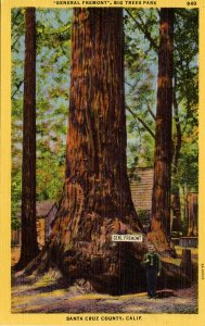 CA - Santa Cruz County. General Fremont, Big Trees