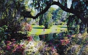 A Scene In Beautiful Magnolia Gardens Charleston South Carolina