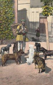 CONSTANTINOPLE , Turkey , 1908 ; Les Chiens de Rue