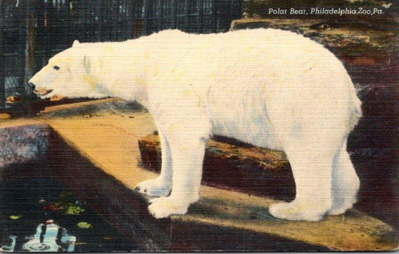 Pennsylvania Philadelphia Zoo Polar Bear