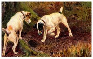 Dog  Tuck's no.9105  Sporting Dogs