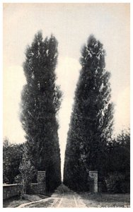 New York  Rochester Sepulchre Cemetery , popular lane