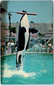 SAN DIEGO, California  CA   SHAMU the KILLER WHALE  Sea World 1967   Postcard