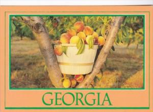 Georgia A Basket Of Peaches