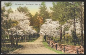 Springtime Southern Pines North Carolina Unused c1920s