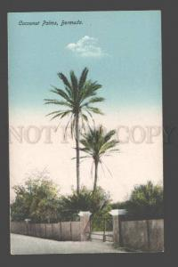 090314 BERMUDA Cocoanut Palms Vintage PC