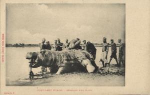chad, FORT-LAMY, N'Djamena, Butchering a Hippo (1910s) Postcard