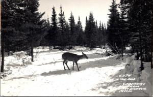 Michigan West Branch Deer Out In The Cold 1953 Real Photo
