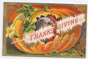 Vintage Thanksgiving Postcard Embossed Gold Turkey Pumpkin White Feather 1908