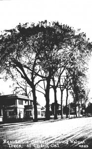 California Chico Residence Street Showing Walnut Trees