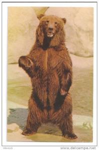 Los Angeles Zoo Alaskan Brown Bear Ursus Arctos Vintage Postcard