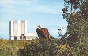 Symbols of supremacy, the magnificent American Eagle Florida, USA Space Unused