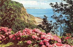 Hydrangeas and Luccombe Chine Looking Towards Shanklin Isle of Wight