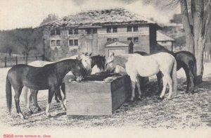 Horses , Switzerland , 1907