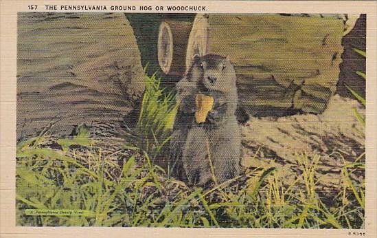 The Pennsylvania Ground Hog Of Woodchuck Harrisburg Pennsylvania