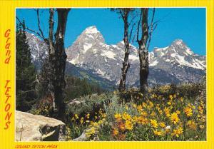 Wyoming Grand Teton Wild Flowers Grand Teton National Park