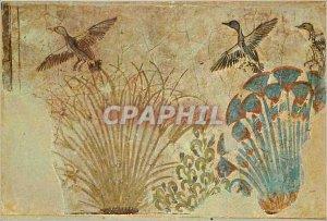 Modern Postcard The Egyptian Museum Cairo