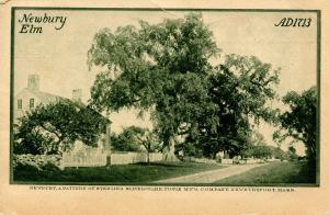 MA - Newburyport. Newbury Elm